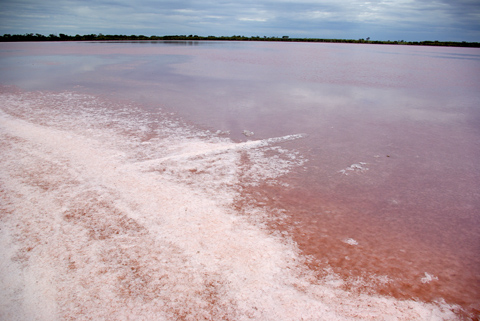 Salt on Branch in Pink Lake